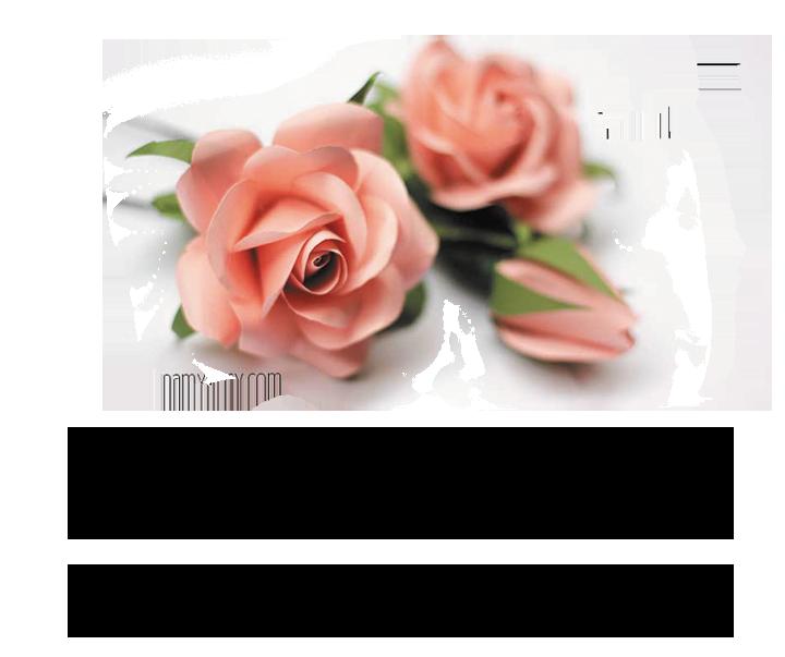 ורד היופי